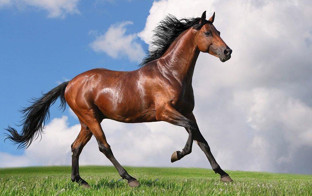 Il cavallo. Una storia sul vittimismo e sullepossibilità