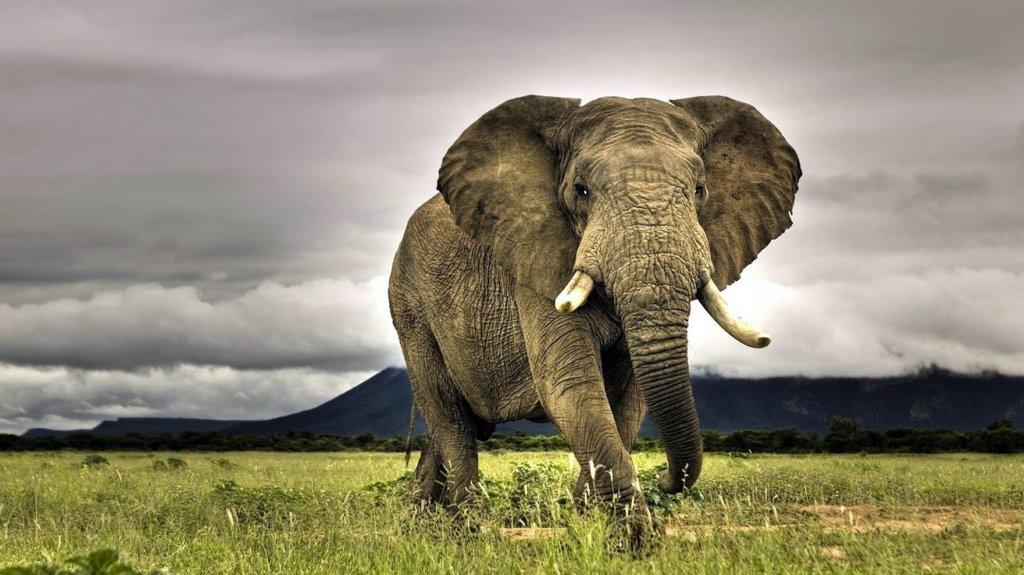 I sei ciechi e l'elefante. Una storia sulsignificato