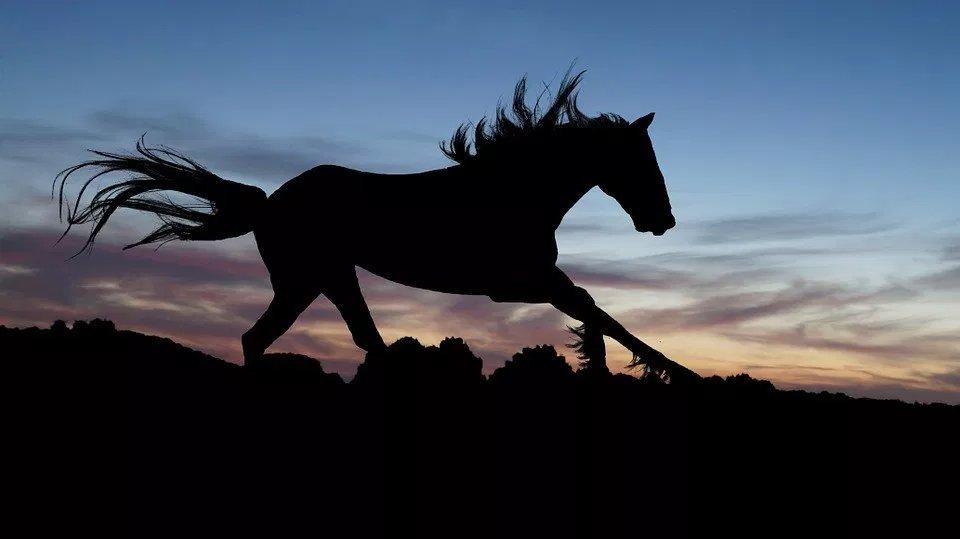 Il cavallo senza cavaliere. Una storia sulla direzione divita