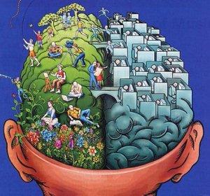 4 fattori dell'intelligenza e della capacità di adattamento. Più1.