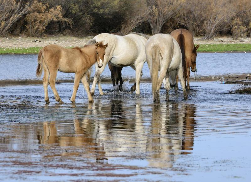 Il cavallino e ilfiume