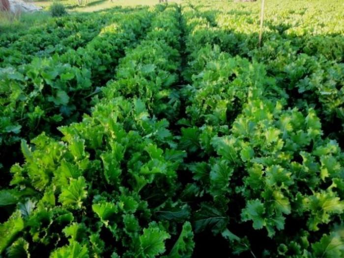 Ancora broccoletti